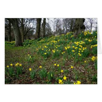 Daffodils. Sophia Gardens, Cardiff, Wales. UK Greeting Card