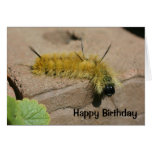 Dagger Moth Caterpillar Nature Birthday Card