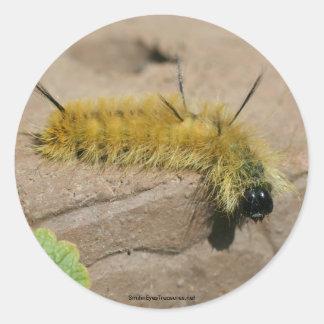 Dagger Moth Caterpillar Nature Photo Sticker Label