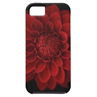 Dahlia 4 iPhone 5 cases