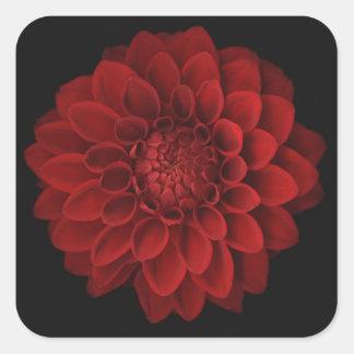 Dahlia 4 square sticker