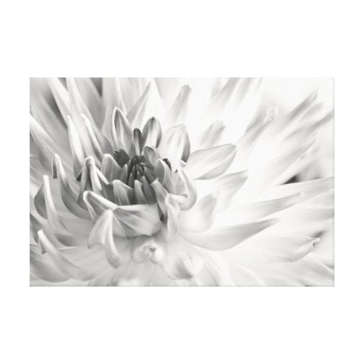 Dahlia Gallery Wrapped Canvas