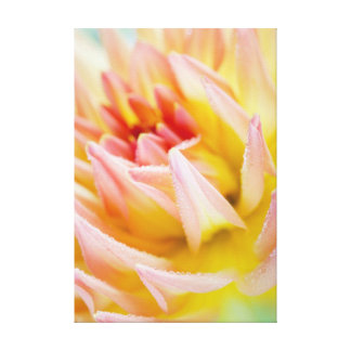 Dahlia Stretched Canvas Prints