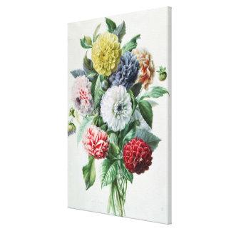Dahlia Gallery Wrap Canvas