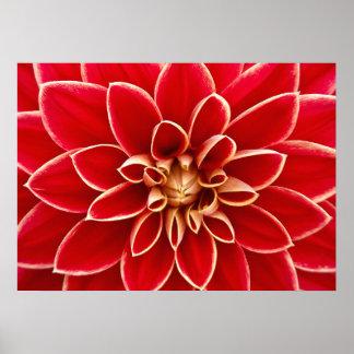 Dahlia Closeup Print