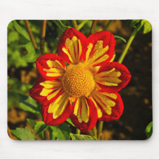 Dahlia, dahlia farm, Canby, Oregon, USA 1 Mouse Mat