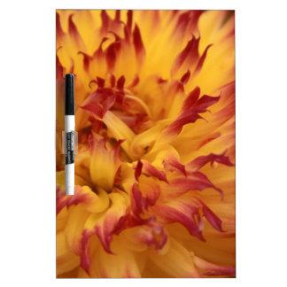 Dahlia Dry-Erase Board