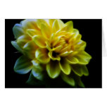 Dahlia flower and meaning