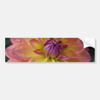 Dahlia Flower Bloom Bumper Sticker