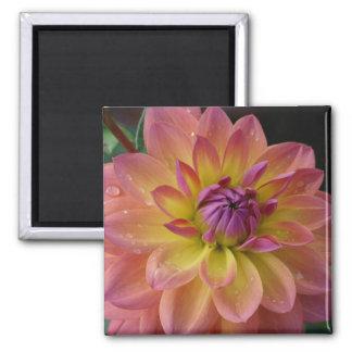 Dahlia Flower Bloom Fridge Magnet