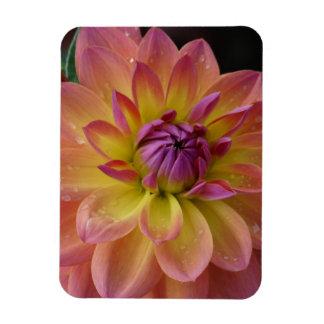 Dahlia Flower Bloom Rectangular Magnet
