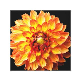 Dahlia flower canvas. canvas print