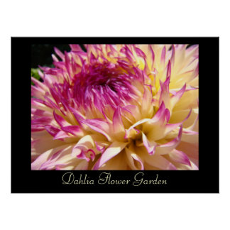 Dahlia Flower Garden art print Pink Purple Dahlias