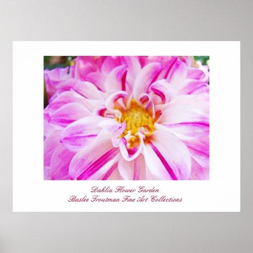 Dahlia Flower Garden Fine Art Prints Collections Poster