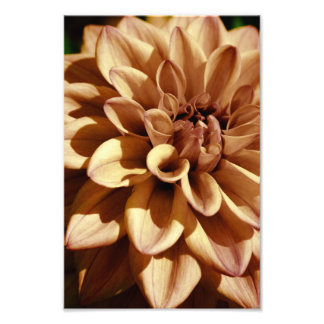 Dahlia Flower Macro Photography | Photo Print