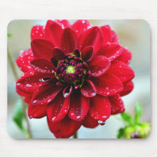 Dahlia flower mousepad