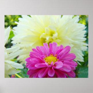 Dahlia Flowers Garden art prints Pink White Dahlia Posters