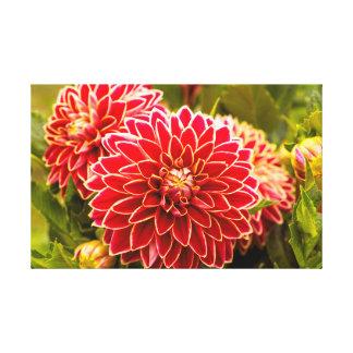 Dahlia In Bloom 11 Canvas Print