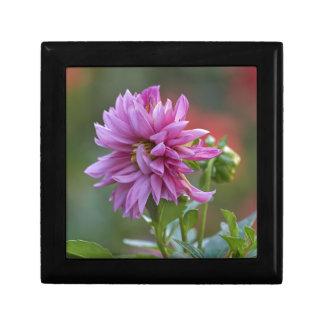 dahlia in the garden gift box