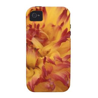 Dahlia iPhone 4 Cases