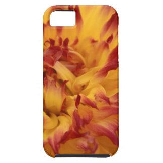 Dahlia iPhone 5 Cases