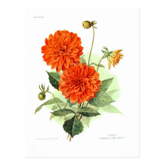 Dahlia 'Orange Fire King' Postcard