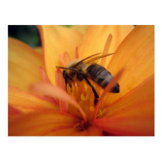 Dahlia (orange) postcard