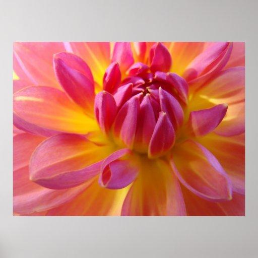 Dahlia Pink Purple Yellow Flower Art Prints Canvas Print