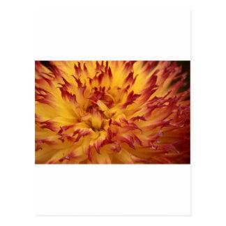 Dahlia Postcard
