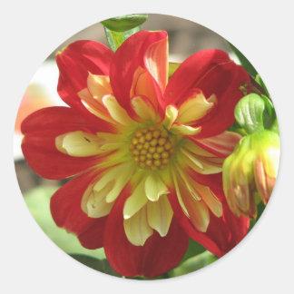 Dahlia Scarlet Classic Round Sticker