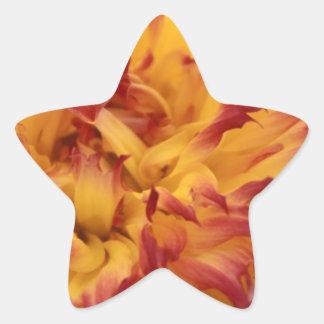 Dahlia Star Stickers