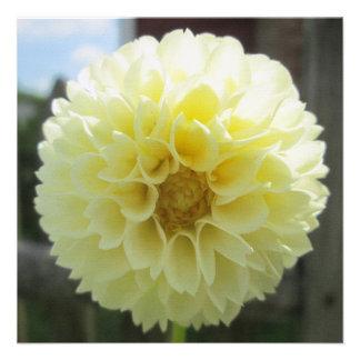 Dahlia Sunlit Yellow Flower Custom Announcement