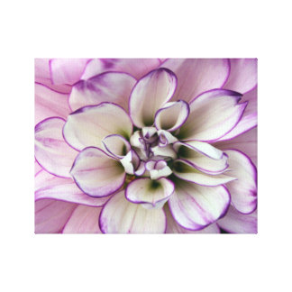dahlia wrapped canvas