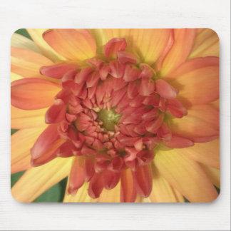 Dahlia: Yellow and salmon --- Mouse Pad