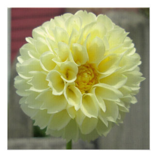 Dahlia Yellow Angle Flower Personalized Announcements