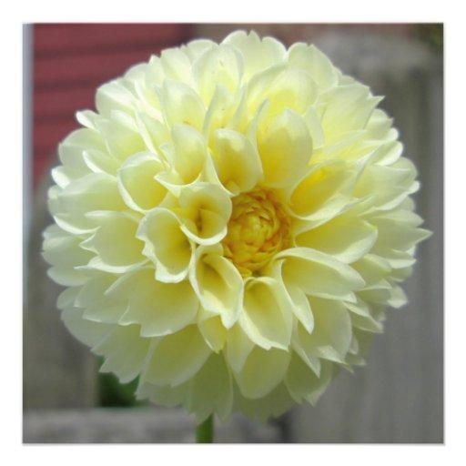 Dahlia Yellow Angle Flower Custom Invitations