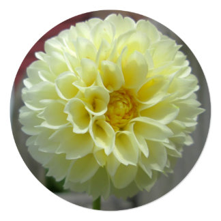 Dahlia Yellow Angle Flower 5.25x5.25 Square Paper Invitation Card
