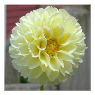 Dahlia Yellow Angle Flower Custom Invitation