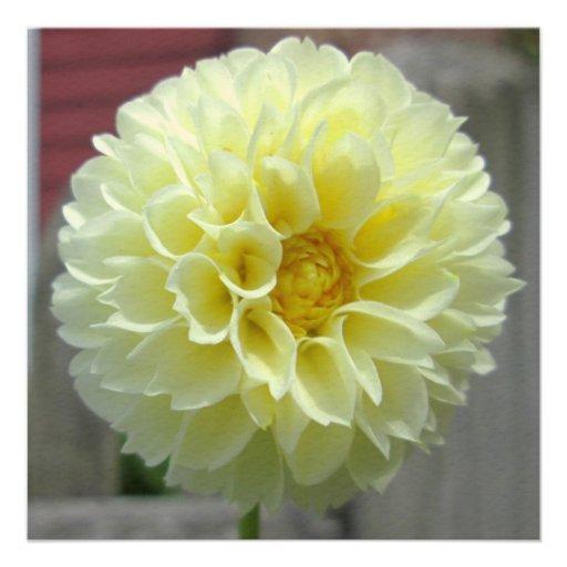 Dahlia Yellow Angle Flower Custom Announcement