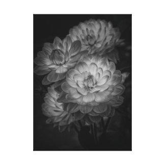 Dahlia's Canvas Print