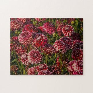 Dahlias, dahlia farm, Canby, Oregon, USA 4 Jigsaw Puzzle
