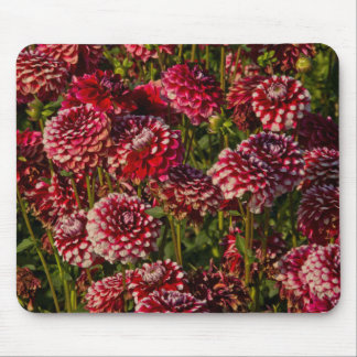 Dahlias, dahlia farm, Canby, Oregon, USA 4 Mouse Mat