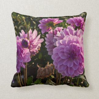 Dahlias, dahlia farm, Canby, Oregon, USA 5 Cushion