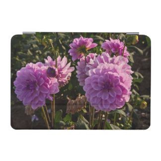 Dahlias, dahlia farm, Canby, Oregon, USA 5 iPad Mini Cover