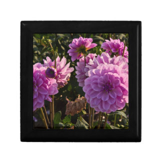 Dahlias, dahlia farm, Canby, Oregon, USA 5 Small Square Gift Box