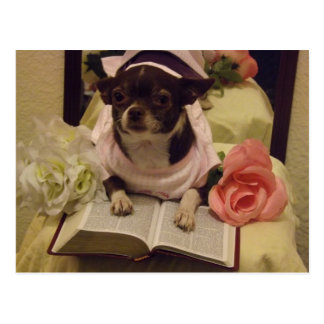 Daily Bible Reading Dog Postcard