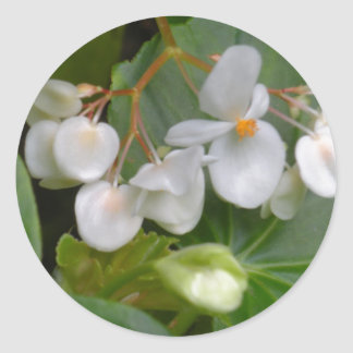 Dainty Cluster of White Flowers Round Stickers
