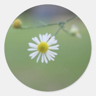 Dainty Daisy Round Sticker