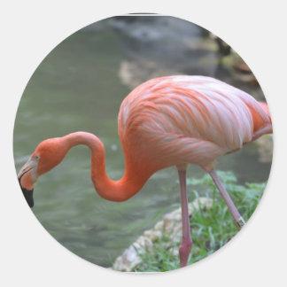 Dainty Flamingo Round Stickers