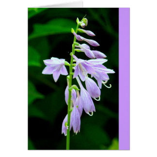 DAINTY LAVENDER BLOSSOMS ON STEM (PHOTOG) NOTE CARD